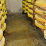 fabrication-comte-fromagerie-lepicurium-la-rochelle